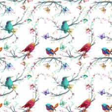 Сойки и колибри
